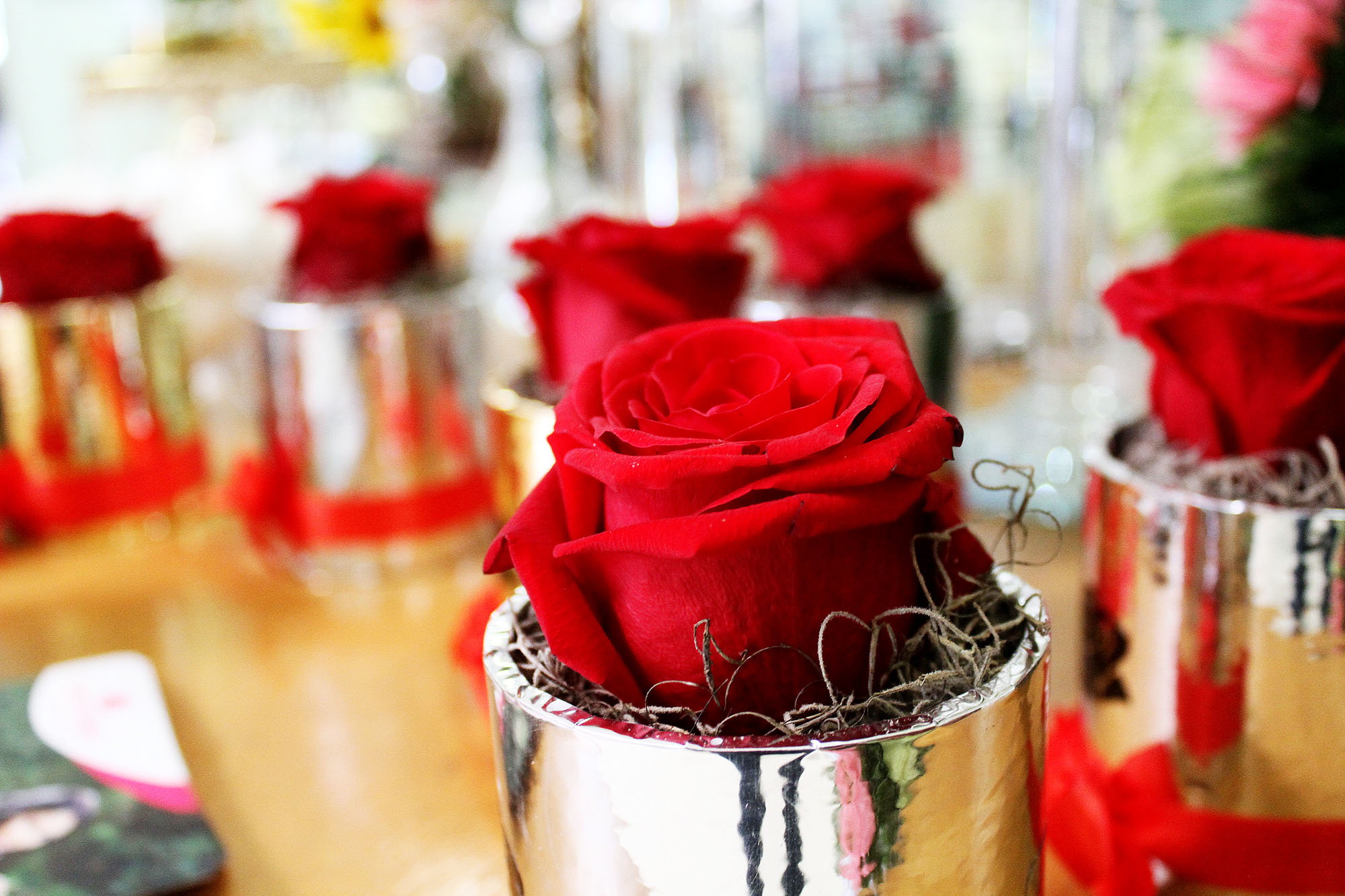 Novocentro rosas
